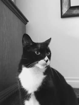 Cat Feline Kitty #260760