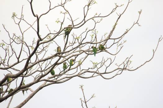 Branchlet Plant Leaf #260867