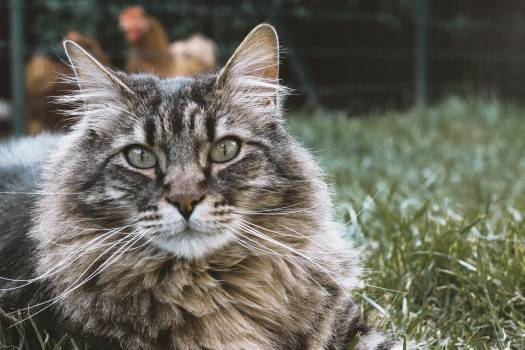 Cat Feline Domestic cat #260879