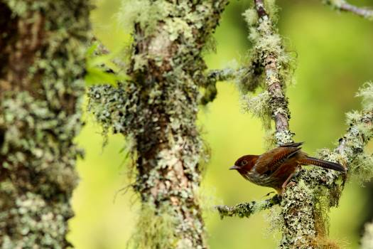 Tree Bird Finch Free Photo