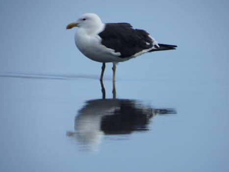Bird Feather Albatross Free Photo