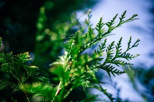 Plant Leaf Herb Free Photo
