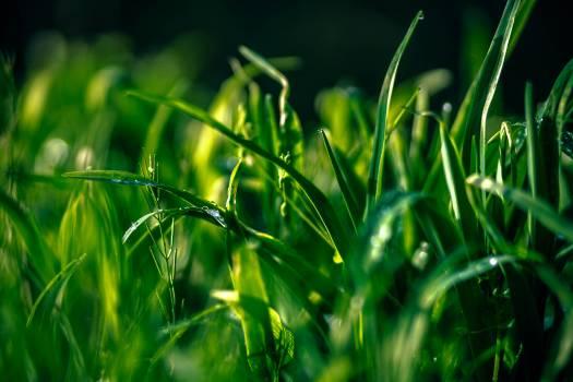 Grass Plant Field Free Photo