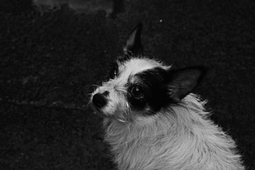 Dog Toy dog Canine #261563