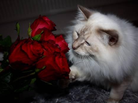 Cat Feline Kitten #261620