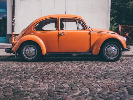 orange beetle Free Photo