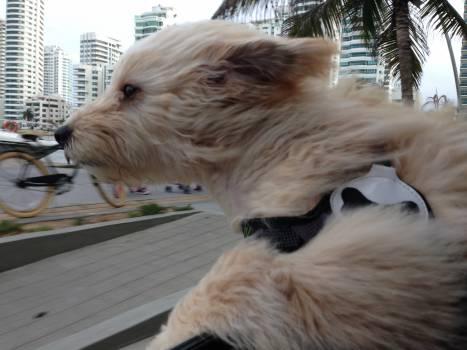 Terrier Dog Hunting dog #261645