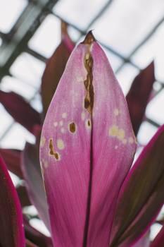 Petal Plant Flower #261647