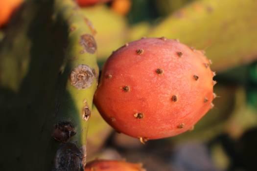 Fruit Produce Food #261696