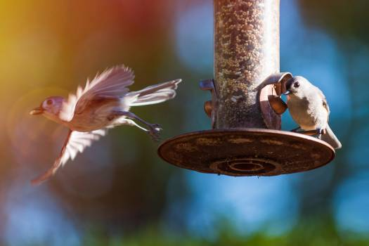 Bird feeder Device Bird Free Photo