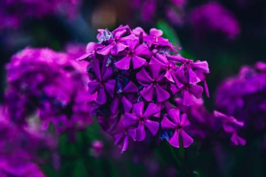 Flowers #26250