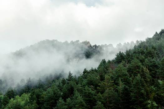 Trees in the clouds Free Photo