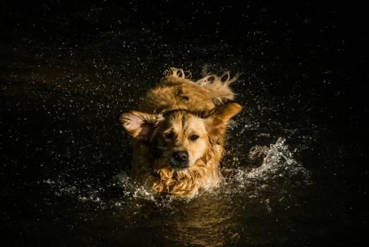 Terrier Dog Hunting dog #262962