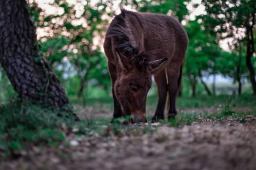 Swine Warthog Ungulate Free Photo