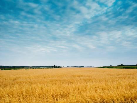A field Free Photo