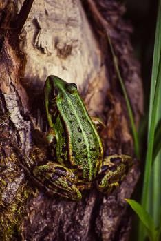 Frog #26354