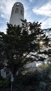 Fir Pine Tree #263631