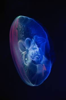 Science Invertebrate 3d Free Photo
