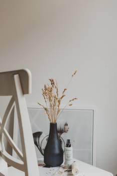 Plant Vase Flower Free Photo