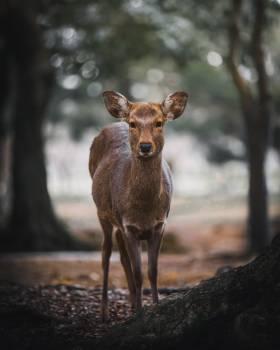 Deer Calf Wildlife Free Photo