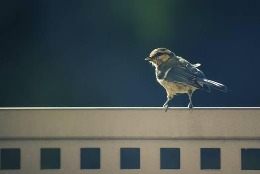 One little bird #26444
