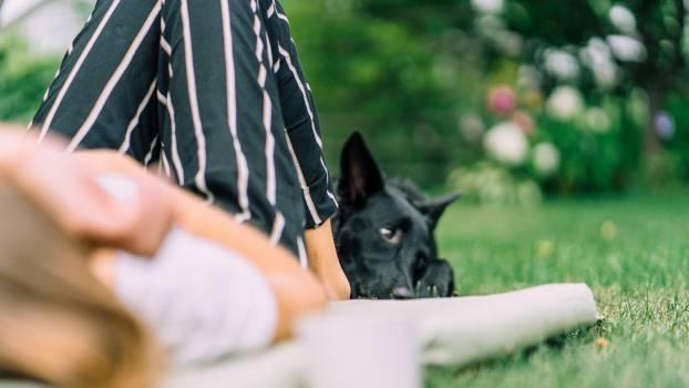Dog Pet Domestic Free Photo