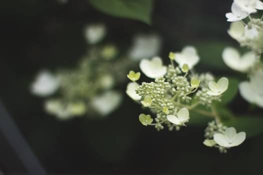 Fairy blooms Free Photo
