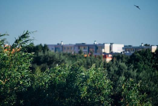 Landscape Free Photo