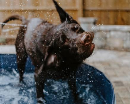 Dog Canine Domestic animal #265805