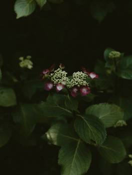 Woody plant Vascular plant Plant #265925