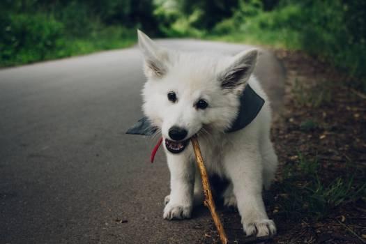 The dog #26602