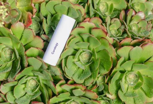 Pinwheel Vegetable Fresh Free Photo