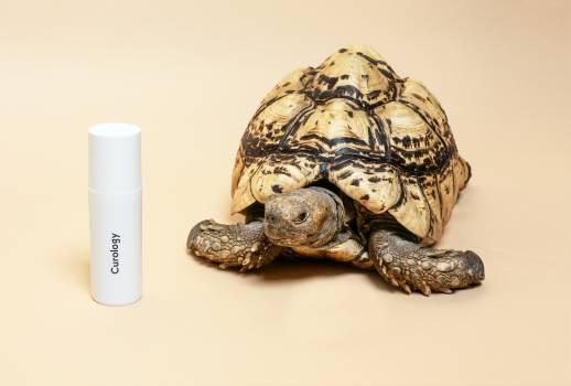 Turtle Reptile Shell Free Photo