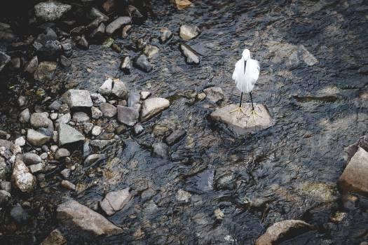 Lonely White Bird #26626
