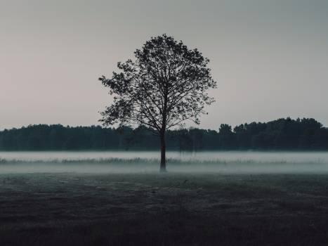 Foggy evening Free Photo
