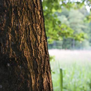 Tree #26681
