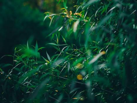 Our private jungle Free Photo