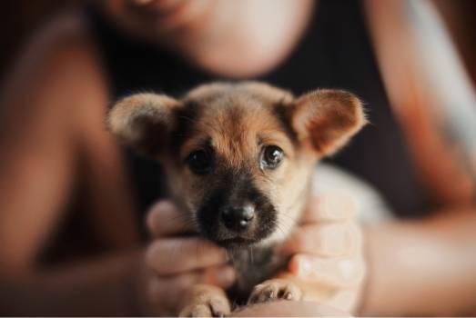 Dog Baby Canine Free Photo