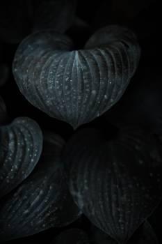 Mollusk Bivalve Invertebrate Free Photo
