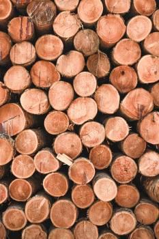 Bark Brown Spice #267222