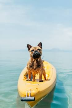 Dog Bulldog Canine Free Photo
