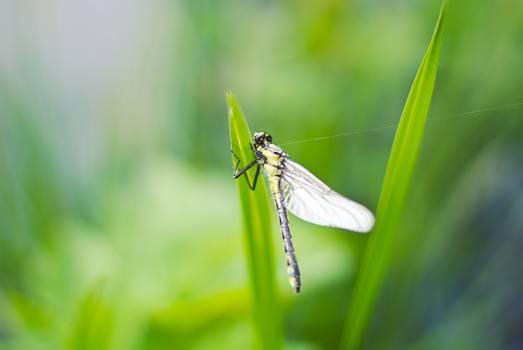 Dragonfly? #26805