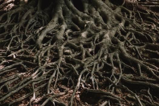 Plant Tree Texture Free Photo