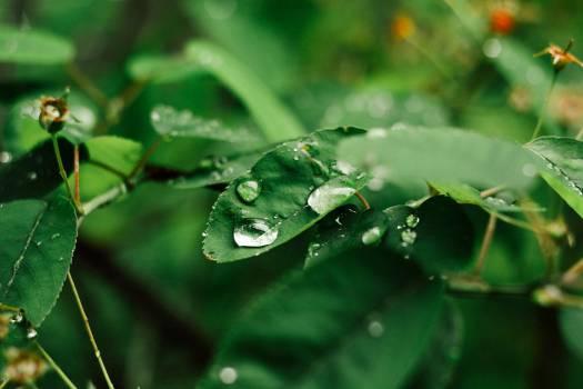 After rain #26842