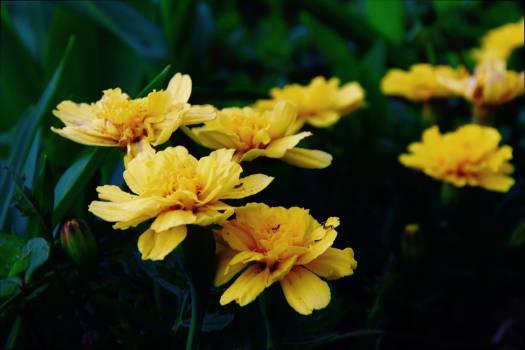 yellow #26861