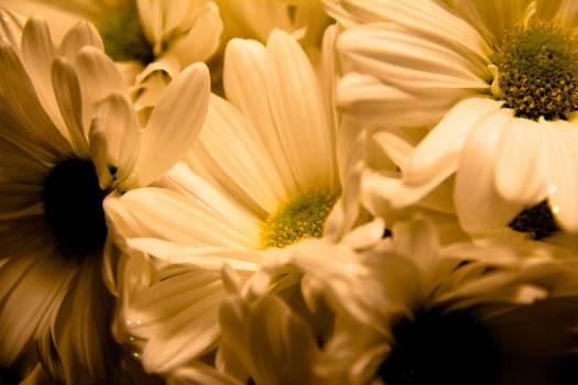 bouquet #26921