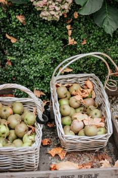 Fruit Edible fruit Apple #269643