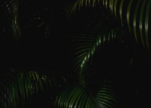 Fractal Artistic Backdrop Free Photo