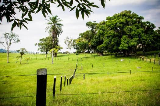 #97 - Countryside, Bahia, Brazil Free Photo