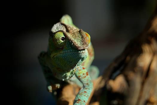 Chameleon Person Eye #270344